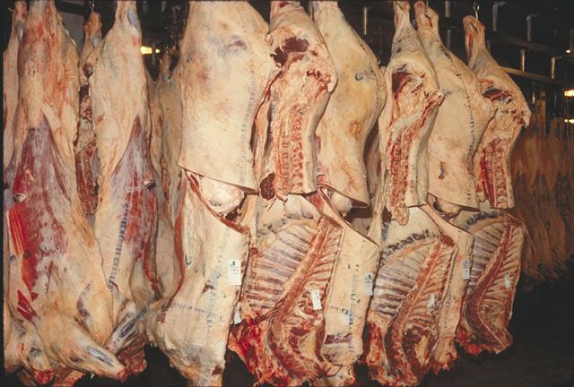 Is Kosher Slaughter Humane?